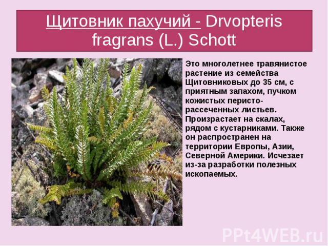 Щитовник пахучий - Drvopteris fragrans (L.) Schott Это многолетнее травянистое растение из семейства Щитовниковых до 35 см, с приятным запахом, пучком кожистых перисто- рассеченных листьев. Произрастает на скалах, рядом с кустарниками. Также он расп…