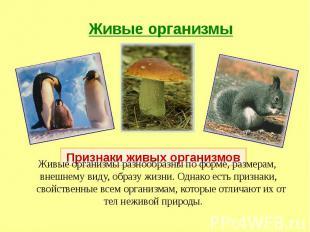 Живые организмы разнообразны по форме, размерам, внешнему виду, образу жизни. Од