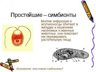 Многие инфузории и жгутиконосцы обитают в желудке и кишечнике насекомых и жвачны