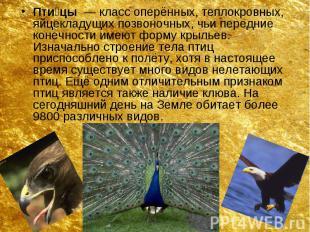 Пти цы — класс оперённых, теплокровных, яйцекладущих позвоночных, чьи пере
