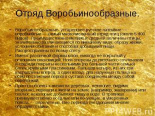 Отряд Воробьинообразные. Воробьинообра зные- устаревшее русское название—