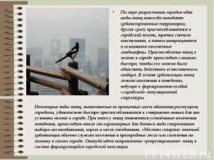 По мере разрастания городов одни виды птиц навсегда покидают урбанизированные те