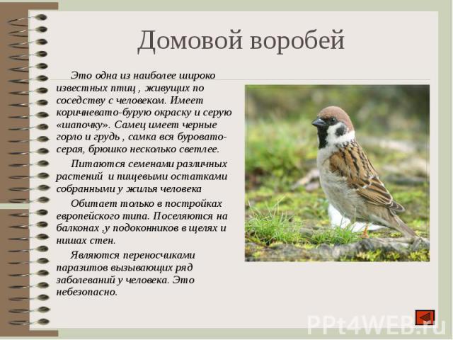 Это одна из наиболее широко известных птиц , живущих по соседству с человеком. Имеет коричневато-бурую окраску и серую «шапочку». Самец имеет черные горло и грудь , самка вся буровато-серая, брюшко несколько светлее. Это одна из наиболее широко изве…