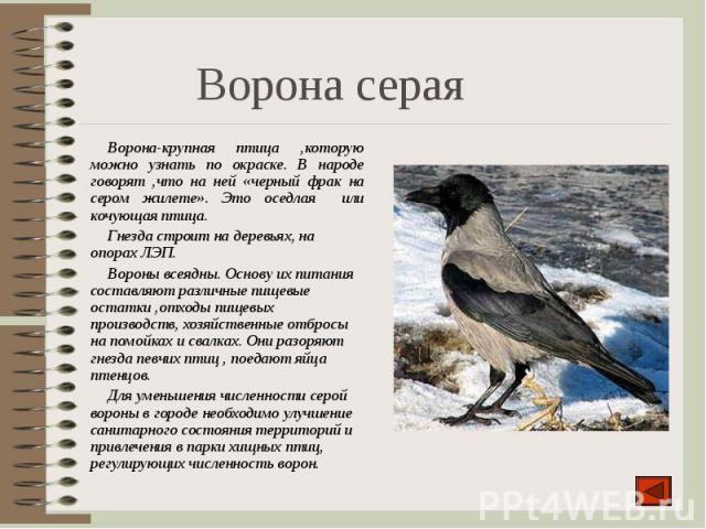 Ворона-крупная птица ,которую можно узнать по окраске. В народе говорят ,что на ней «черный фрак на сером жилете». Это оседлая или кочующая птица. Ворона-крупная птица ,которую можно узнать по окраске. В народе говорят ,что на ней «черный фрак на се…