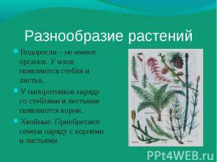 Водоросли – не имеют органов. У мхов появляются стебли и листья. Водоросли – не