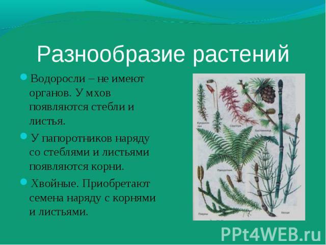 Водоросли – не имеют органов. У мхов появляются стебли и листья. Водоросли – не имеют органов. У мхов появляются стебли и листья. У папоротников наряду со стеблями и листьями появляются корни. Хвойные. Приобретают семена наряду с корнями и листьями.