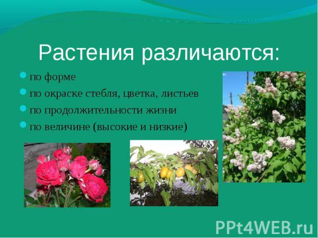 по форме по форме по окраске стебля, цветка, листьев по продолжительности жизни по величине (высокие и низкие)