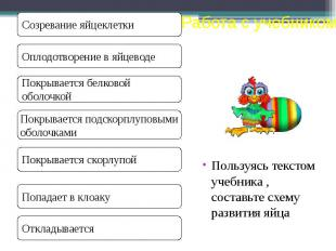 Пользуясь текстом учебника , составьте схему развития яйца Пользуясь текстом уче