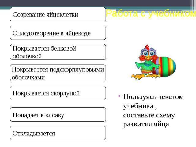 Пользуясь текстом учебника , составьте схему развития яйца Пользуясь текстом учебника , составьте схему развития яйца