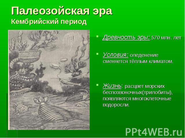 Древность эры: 570 млн. лет Древность эры: 570 млн. лет Условия: оледенение сменяется тёплым климатом. Жизнь: расцвет морских беспозвоночных(трилобиты), появляются многоклеточные водоросли.