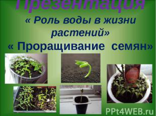 Презентация « Роль воды в жизни растений» « Проращивание семян»