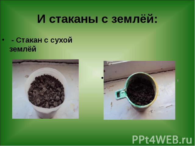 И стаканы с землёй: - Стакан с сухой землёй