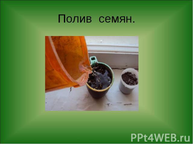Полив семян.