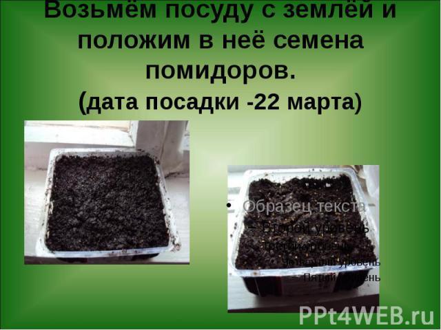 Возьмём посуду с землёй и положим в неё семена помидоров. (дата посадки -22 марта)