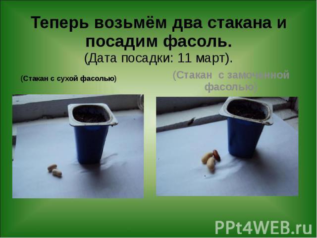 Теперь возьмём два стакана и посадим фасоль. (Дата посадки: 11 март). (Стакан с сухой фасолью)