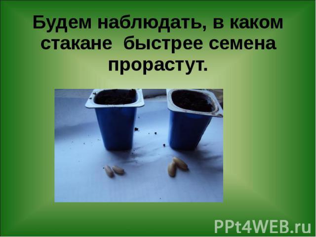 Будем наблюдать, в каком стакане быстрее семена прорастут.
