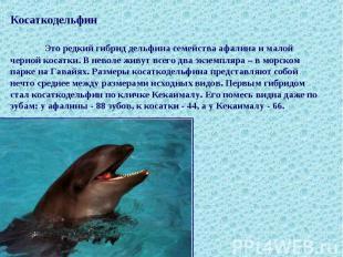 Косаткодельфин Это редкий гибрид дельфина семейства афалина и малой черной косат