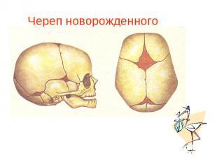Череп новорожденного