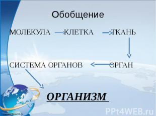 Обобщение МОЛЕКУЛА КЛЕТКА ТКАНЬ СИСТЕМА ОРГАНОВ ОРГАН ОРГАНИЗМ
