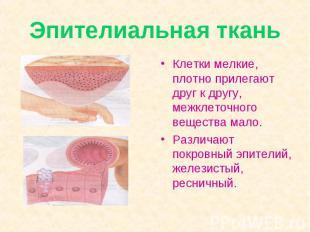 Эпителиальная ткань Клетки мелкие, плотно прилегают друг к другу, межклеточного