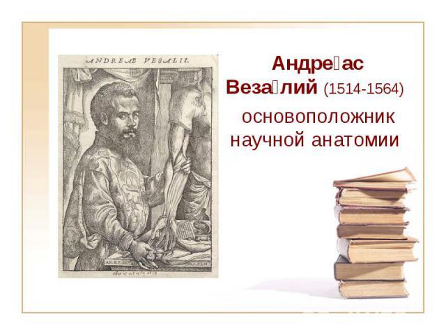 Андре ас Веза лий (1514-1564) основоположник научной анатомии