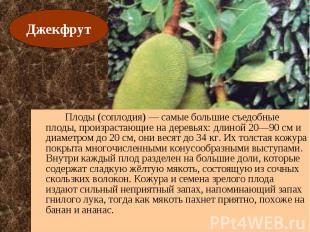 Плоды (соплодия) — самые большие съедобные плоды, произрастающие на деревьях: дл