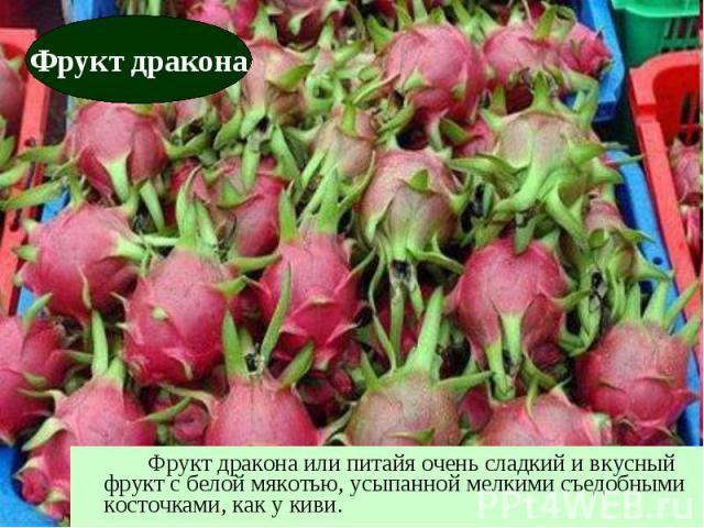 Фрукт дракона или питайя очень сладкий и вкусный фрукт с белой мякотью, усыпанной мелкими съедобными косточками, как у киви.