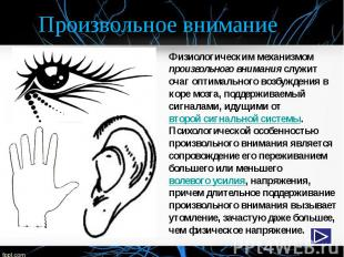 Произвольное внимание Физиологическим механизмом произвольного внимания служит о