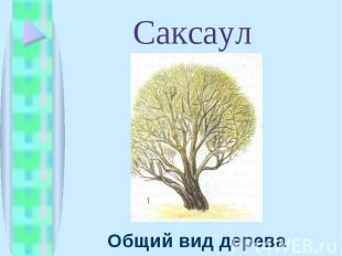 Общий вид дерева Общий вид дерева