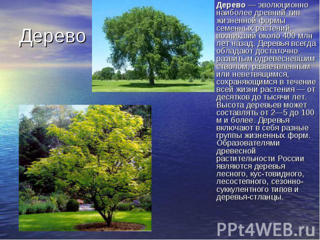 Дерево— эволюционно наиболее древний тип жизненной формы семенных растений, возникший около 400 млн лет назад. Деревья всегда обладают достаточно развитым одревесневшим стволом, разветвленным или неветвящимся, сохраняющимся в течение всей жизн…