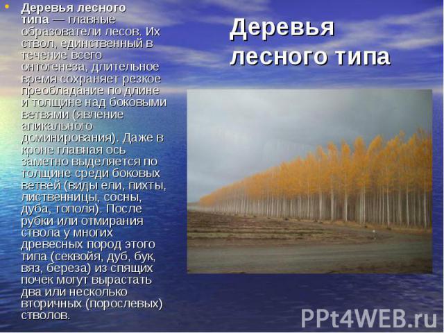 Деревья лесного типа— главные образователи лесов. Их ствол, единственный в течение всего онтогенеза, длительное время сохраняет резкое преобладание по длине и толщине над боковыми ветвями (явление апикального доминирования). Даже в кроне главн…