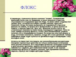 """ФЛОКС В переводе с греческого флоко означает """"пламя"""". Пламенными факел"""
