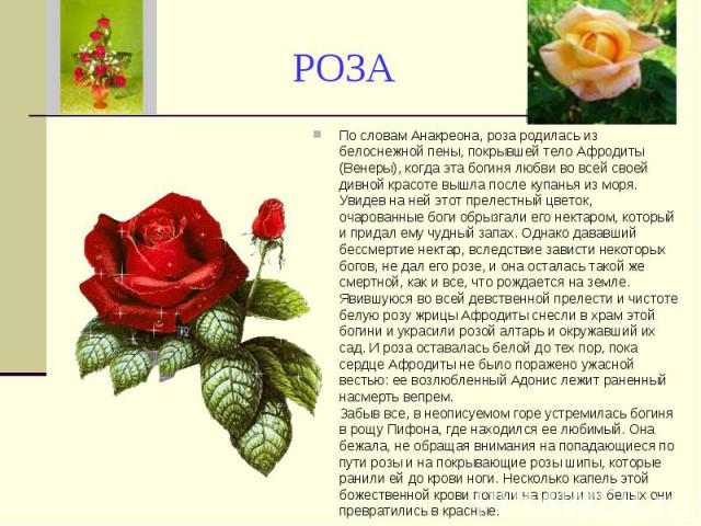 РОЗА По словам Анакреона, роза родилась из белоснежной пены, покрывшей тело Афродиты (Венеры), когда эта богиня любви во всей своей дивной красоте вышла после купанья из моря. Увидев на ней этот прелестный цветок, очарованные боги обрызгали его нект…