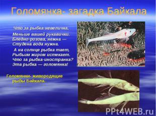 Что за рыбка-невеличка, Что за рыбка-невеличка, Меньше вашей рукавички. Бледно-р