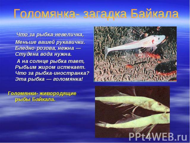 Что за рыбка-невеличка, Что за рыбка-невеличка, Меньше вашей рукавички. Бледно-розова, нежна — Студена вода нужна. А на солнце рыбка тает, Рыбьим жиром истекает. Что за рыбка-иностранка? Эта рыбка — голомянка! Голомянки- живородящие рыбы Байкала.