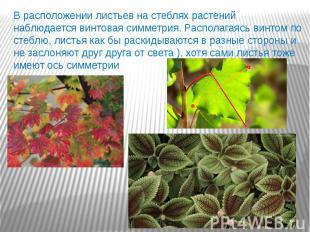 В расположении листьев на стеблях растений наблюдается винтовая симметрия. Распо