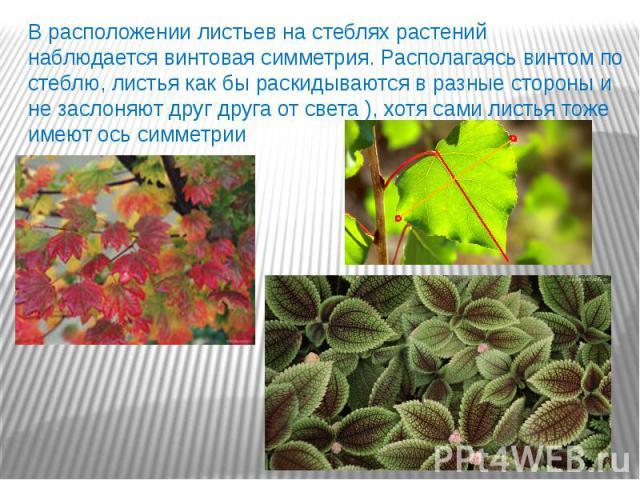 В расположении листьев на стеблях растений наблюдается винтовая симметрия. Располагаясь винтом по стеблю, листья как бы раскидываются в разные стороны и не заслоняют друг друга от света ), хотя сами листья тоже имеют ось симметрии В расположении лис…
