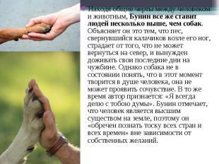 Находя общие черты между человеком и животным,Бунин все же ставит людей не