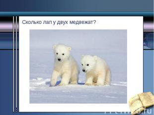 Сколько лап у двух медвежат? Сколько лап у двух медвежат?