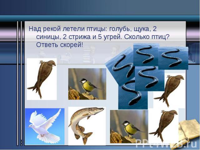 Над рекой летели птицы: голубь, щука, 2 синицы, 2 стрижа и 5 угрей. Сколько птиц? Ответь скорей! Над рекой летели птицы: голубь, щука, 2 синицы, 2 стрижа и 5 угрей. Сколько птиц? Ответь скорей!