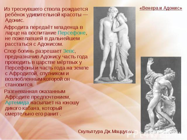 Из треснувшего ствола рождается ребёнок удивительной красоты — Адонис. Из треснувшего ствола рождается ребёнок удивительной красоты — Адонис. Афродита передаёт младенца в ларце на воспитание Персефоне, не пожелавшей в дальнейшем расстаться с Адонисо…