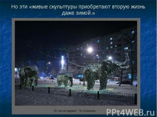 Но эти «живые скульптуры приобретают вторую жизнь даже зимой.»