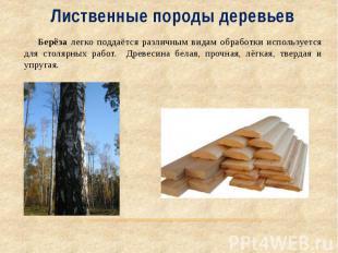 Лиственные породы деревьев Берёза легко поддаётся различным видам обработки испо