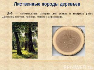 Лиственные породы деревьев Дуб — замечательный материал для резных и токарных ра