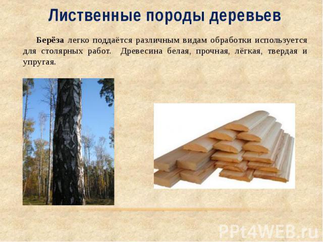 Лиственные породы деревьев Берёза легко поддаётся различным видам обработки используется для столярных работ. Древесина белая, прочная, лёгкая, твердая и упругая.