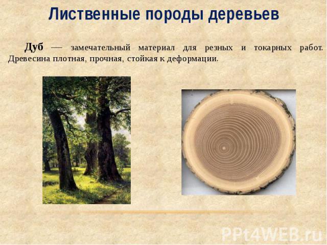 Лиственные породы деревьев Дуб — замечательный материал для резных и токарных работ. Древесина плотная, прочная, стойкая к деформации.