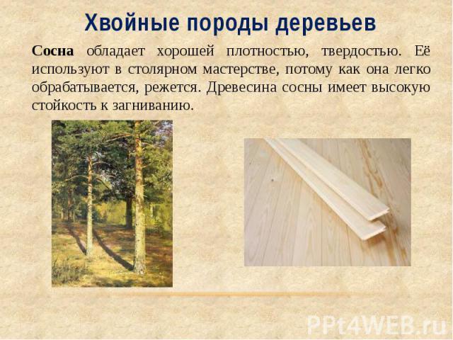 Хвойные породы деревьев Сосна обладает хорошей плотностью, твердостью. Её используют в столярном мастерстве, потому как она легко обрабатывается, режется. Древесина сосны имеет высокую стойкость к загниванию..