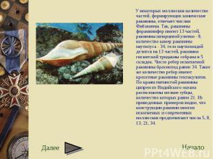 У некоторых моллюсков количество частей, формирующих конические раковины, отвеча