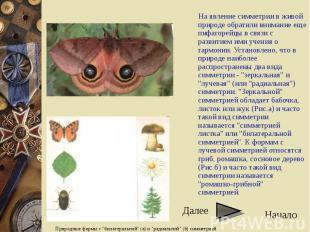 На явление симметрии в живой природе обратили внимание еще пифагорейцы в связи с
