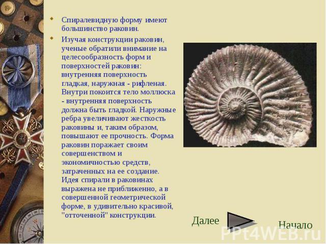 Спиралевидную форму имеют большинство раковин. Спиралевидную форму имеют большинство раковин. Изучая конструкции раковин, ученые обратили внимание на целесообразность форм и поверхностей раковин: внутренняя поверхность гладкая, наружная - рифленая. …